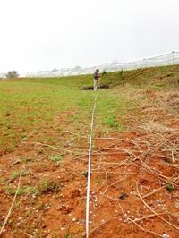 電柵の計測 よもぎ餅 - 葡萄と田舎時間