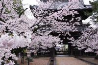 大樹寺 - 花と風景 Photo blog