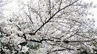 桜を1枚。 - 自由空間の間取り