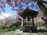 「花の寺」も春らんまん♪ - 風路のこぶちさわ日記