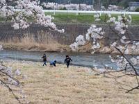 桜祭りの日にⅡ - 鹿深の森
