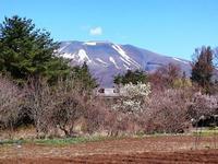 春の装い・・・♪ - 浅間山眺めてほのぼのlife~花だより♪
