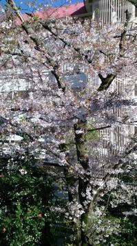 桜、散る - 信夫山文庫 日日雑記
