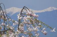 高みでお花見 - 夢・ファンダンゴ