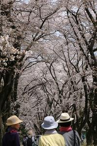青空の奥までsacra - 夢・ファンダンゴ