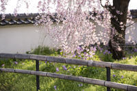光の午後に -慈雲寺- - HI KA RI