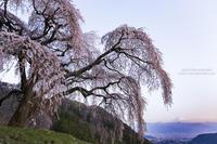 丘の上の一本桜 #1 Twilight - HI KA RI
