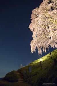 丘の上の一本桜 #2 Night - HI KA RI