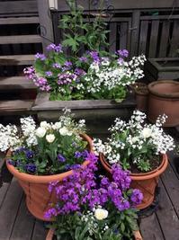 "春の花壇 - 屋上庭園 ""Giardino di Luce"""