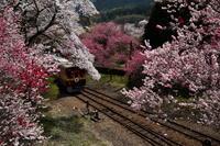 わたらせ渓谷鉄道・・・その2 - 四季の予感