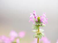 春の幕引き - M2_pictlog