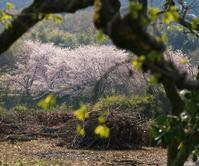 井寺池界隈 春うらら - まほろば 写真俳句