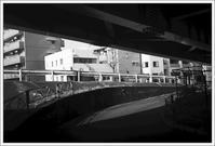 千住散歩 -599 - Camellia-shige Gallery 2