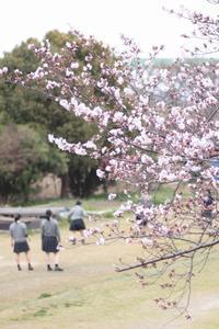 河川敷の桜 他 - ちょこちょこ4