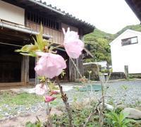 大阪の「老猫専科」土曜日、キャンセル出ました - ご機嫌元氣 猫の森公式ブログ