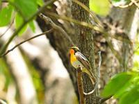 春の鳥たち - 水元かわせみの里水辺のふれあいルーム