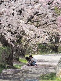 グリーンパークの桜 2 - Y*s ROOM