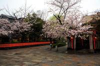 桜2017! ~祇園白川~ - Prado Photography!