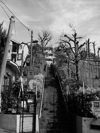 長い階段 - 節操のない写真館