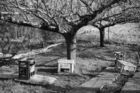 大きな梨の木の下で~~♪ - Photo & Shot