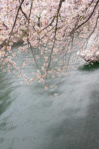 春 - souvenir/un deux trois