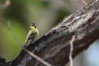 ウソを待っている間に写せた野鳥 - 上州自然散策2