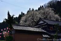 千恵子桜と布橋十二ヶ滝 - Tomの一人旅~気のむくまま、足のむくまま~