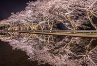 岐阜県下呂市 八坂湖畔桜 2017.4.16 - 中部地方風景写真