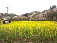 福島の花巡りーJUSTIN BIEBER __Pray - そろそろ笑顔かな