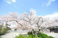 まとわる糸と魂と - 写真家 田島源夫ブログ『しゃごころでっしゃろ!』