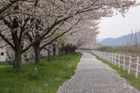 桜降る道  - 風の彩り-2