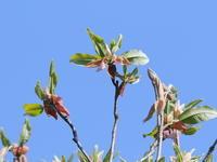 強風の里山 - TACOSの野鳥日記