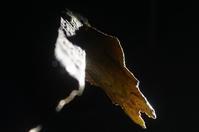 春待ち蛹 ナウ - おらんくの自然満喫
