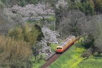 上総大久保駅 春景 - 2017年桜・小湊鉄道 - - ねこの撮った汽車