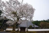 桜便り2017 京北町の桜巡り@玉林寺 - デジタルな鍛冶屋の写真歩記