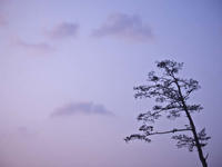 風が吹きつけるだけ - 1/365 - WEBにしきんBlog