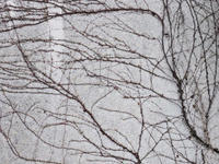 Wall 2017#04 - 1/365 - WEBにしきんBlog