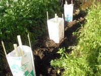 夏野菜 植えた - ひろしの「どっこい田んぼのジャージーデー」