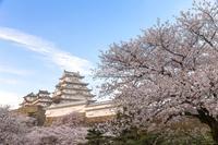 姫路城と桜 - Self-satisfaction