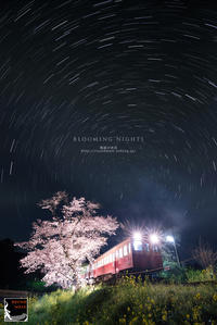 blooming nights - 箱庭の休日
