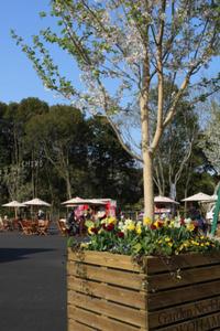 花の便りは横浜から〜里山編〜 part1 - CHIROのお庭しごと