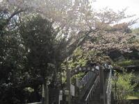 ♪芝桜☆富士山求めて(吾妻山公園~厳島湿生公園) - MY FAVORITE SPACE