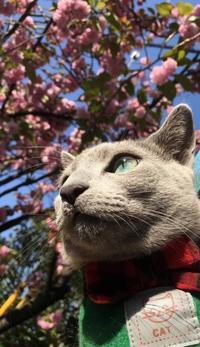 猫花見 - ササリーヌ伍長のズギューンでドギューンでゴゴゴな日常 2