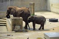 家族で水浴び@とべ動物園 - 今日ものんびり動物園