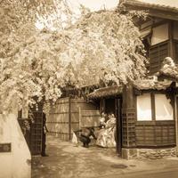 晴れの門出に緊張気味の枝垂桜 - Film&Gasoline