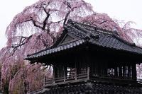 阿弥陀寺 - 私景空間