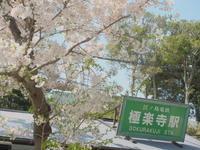 ぶらり江ノ電~桜と共に - 8001列車の旅と撮影記録