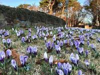 【春をみつける散歩路】 - 性能とデザイン いい家大研究