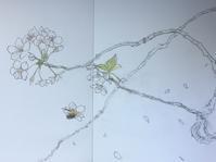 四ツ谷の桜。 - 『一日一畫』 日本画家池上紘子