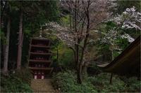 塔を彩る山桜 - duke days
